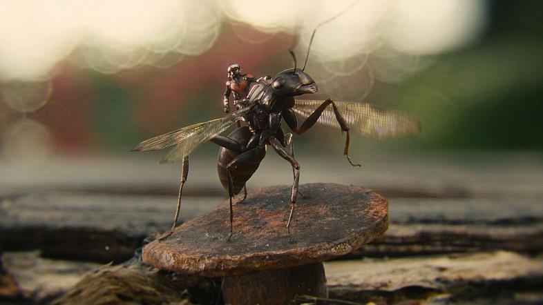 ant man ants