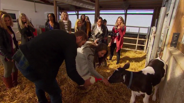 Nick The Bachelor Cows Date Fam